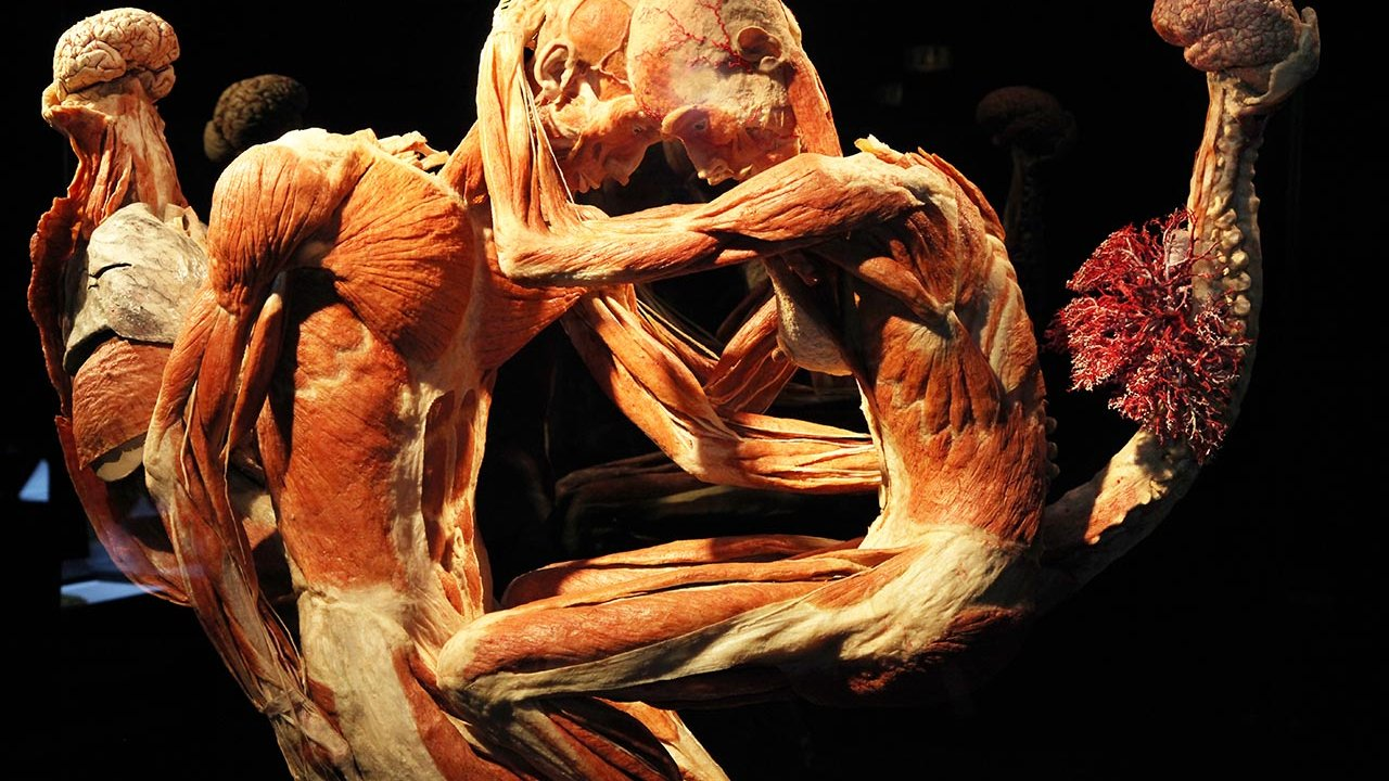 Body Worlds - Exhibition Amsterdam