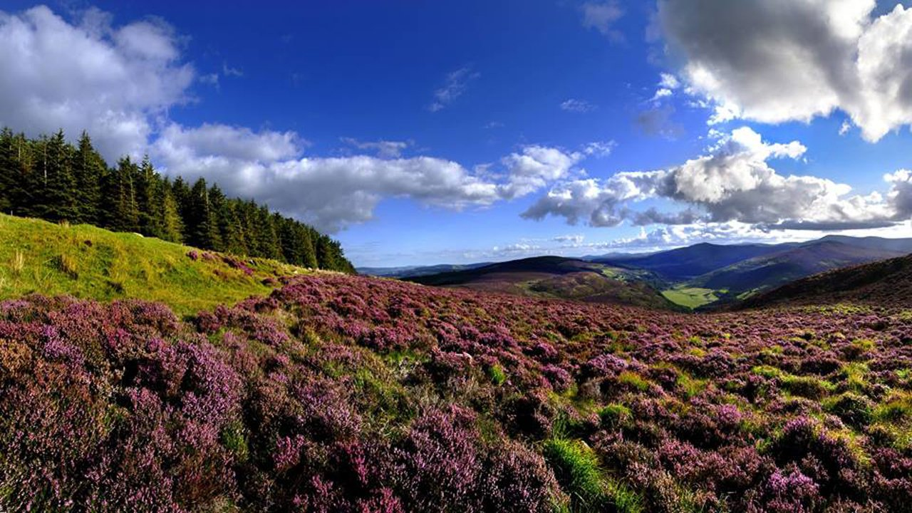 Autumnal Walk in Wicklow Hills. Ireland Photograph by ... |Wicklow Hills Ireland