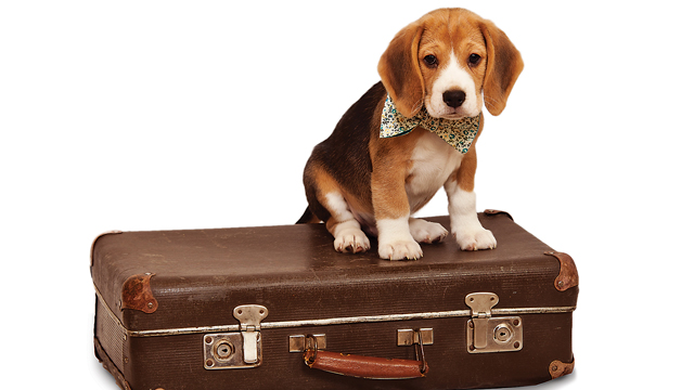 Travel-Safety Guide For Pets
