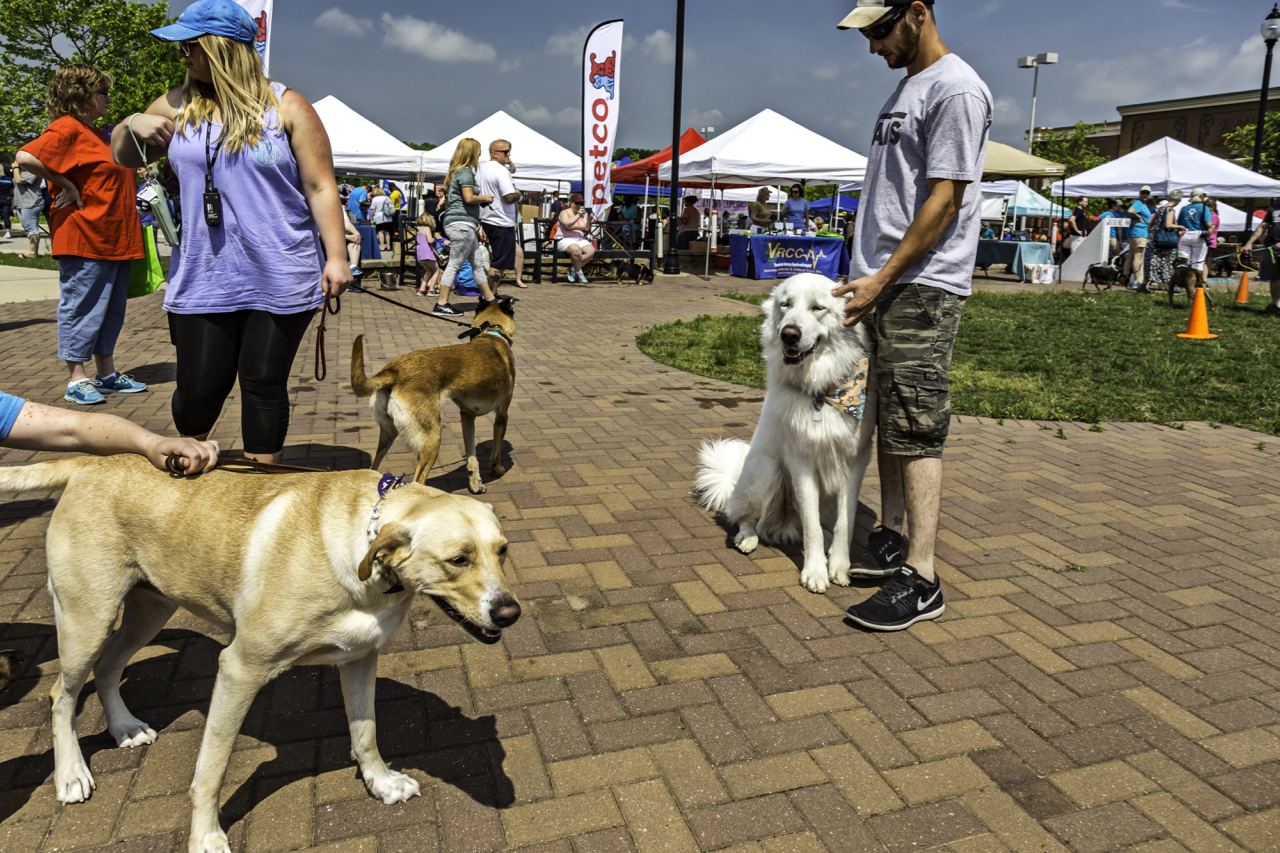 Woofstock Festival Is For The Dogs And Their Families