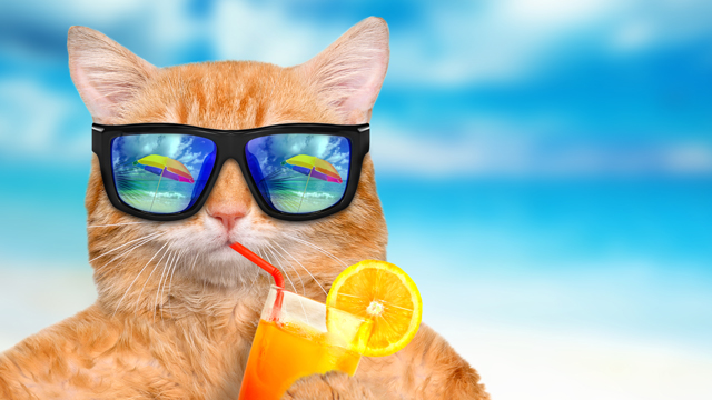 Cool Cats And Not-So-Hot Dogs