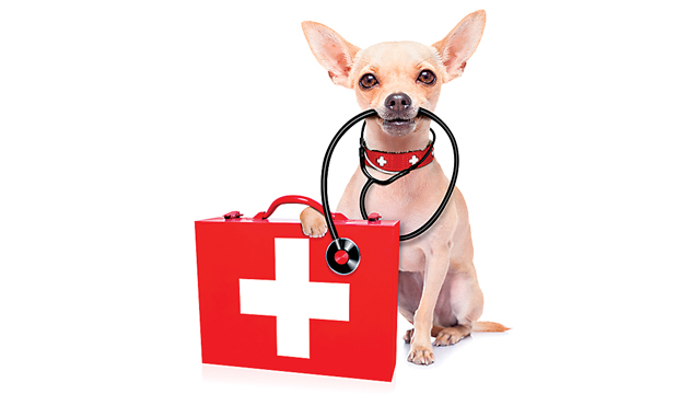 Need-to-Know Pet First Aid