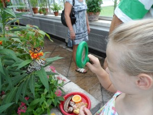 Butterflies LIVE! At Lewis Ginter – Tropical, Educational, And Fun