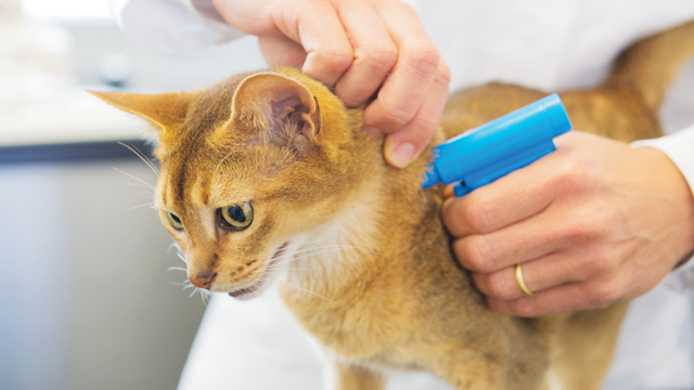 The Truth About Microchipping