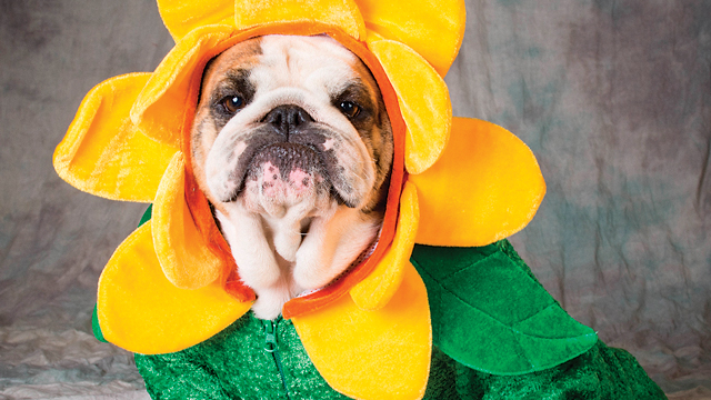 Halloween Hazards For Pets