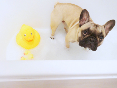 dogs in bathtubs