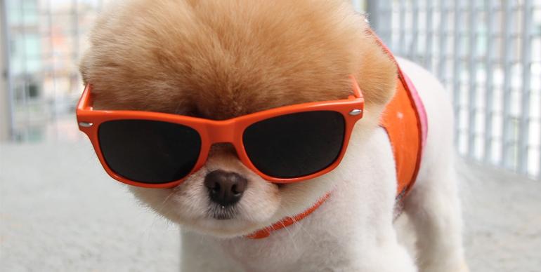 puppies in sunglasses