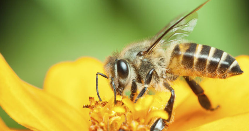blog-4-things-to-do-when-your-child-is-stung-by-a-bee-09282015