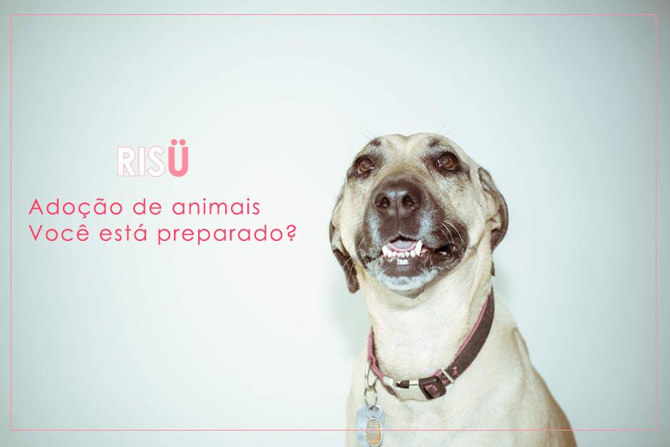 Adoção de Cachorro   Você está preparado?