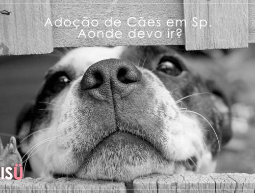Adoção de Cães SP | Aonde devo ir?