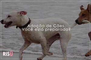 Adoção de Cães