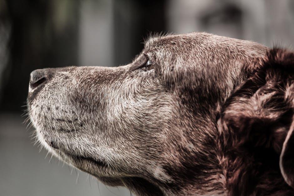 Adoção de Cachorros | Animais, assim como você, envelhecem.