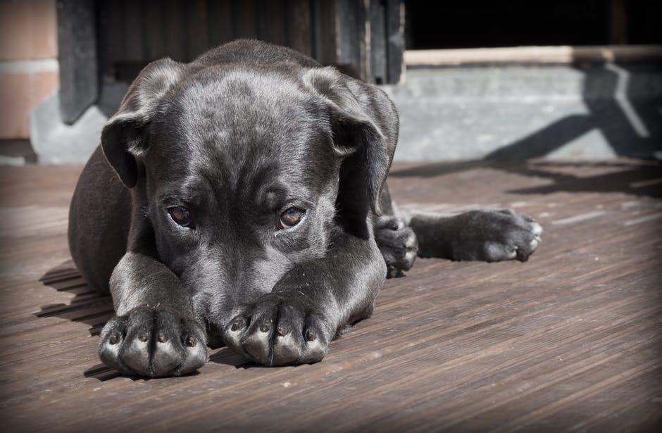 Adoção de Cachorros | NUNCA abandone seu animalzinho.