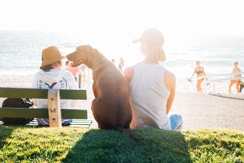 Adoção de Cães Bh | Onde adotar meu novo melhor amigo?