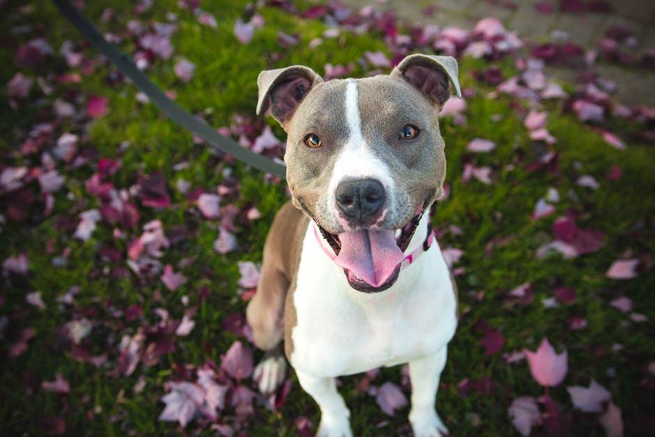 Adoção de Cães | Qual é o tamanho e o temperamento do animal?