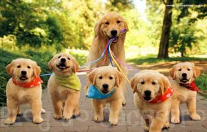 Adoção de Cães BH