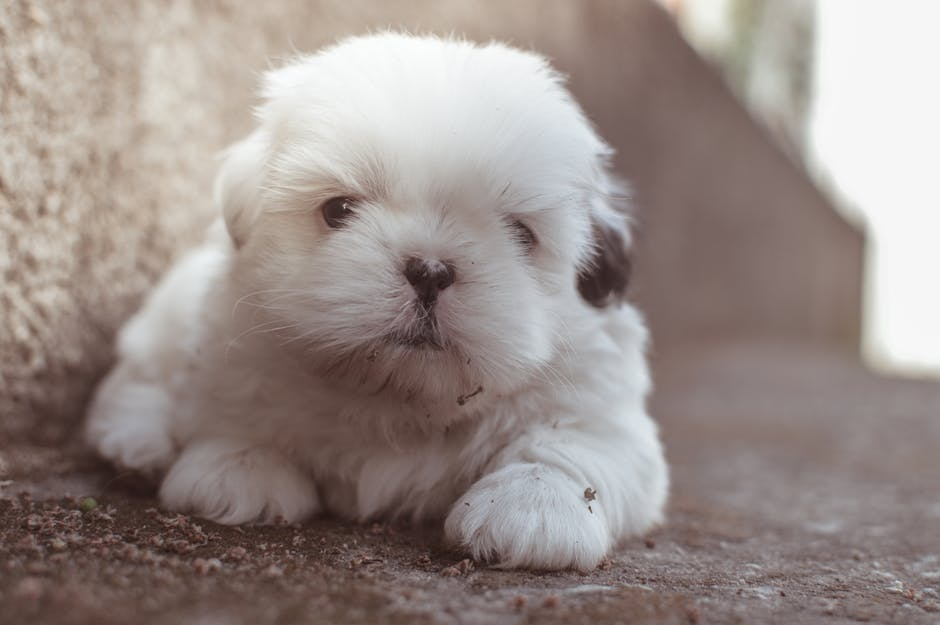 5000 Nomes para cachorro
