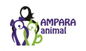 Doação de gatos - amparanimal