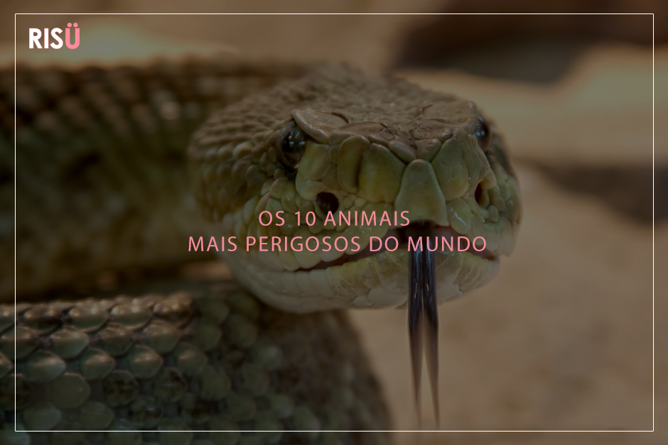 Animais mais perigosos do mundo