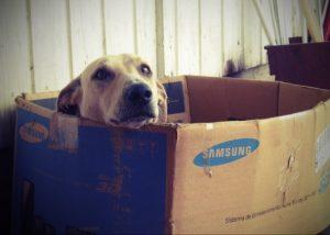 Como fazer casinha de cachorro com papelão