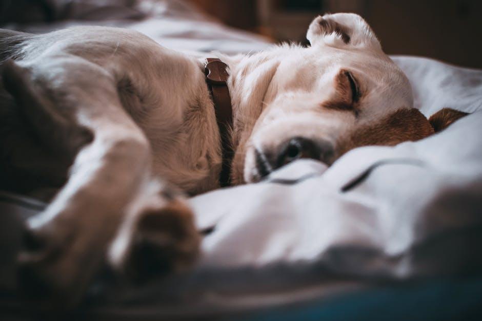 Como fazer casinha de cachorro com tecido e espuma