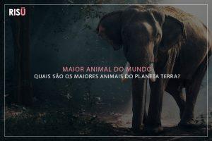 Maior Animal do Mundo