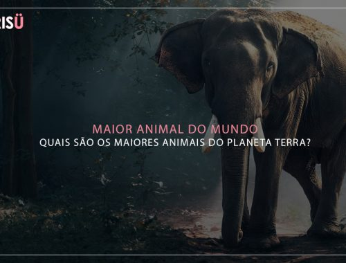 Maior Animal do Mundo