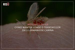 Mosquito Palha