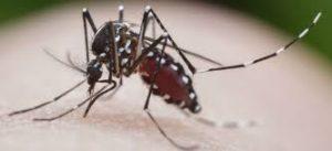 animais mais perigosos do mundo mosquito