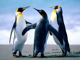 maior animal do mundo pinguim