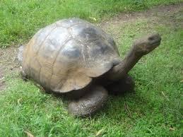 Animais extintos redescobertos: Tartaruga das Galápagos
