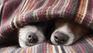 roupinha de cachorro inverno