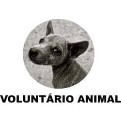 Voluntário Animal