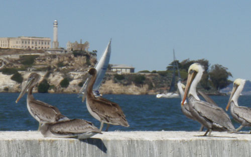 The birds of Alzatraz