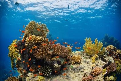 Sonnencremes Korallen