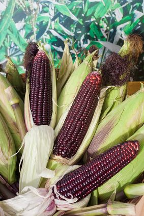 Lila Mais und Antioxidantien