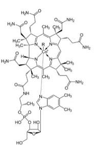 Aufbau von Vitamin B12