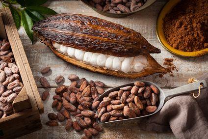 Kakao Flavanole