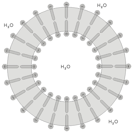 Liposom, schematische Darstellung