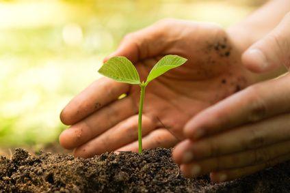Rohkosternährung hilft der Erde
