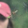 1466646885 peru spider web
