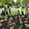 20170523 entrance flower planting 0886