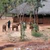 03 elephantorphanageproject