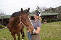 Equine minor story