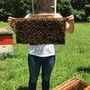 Hanselman honey bees