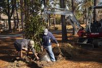 Tree planting graduation dec