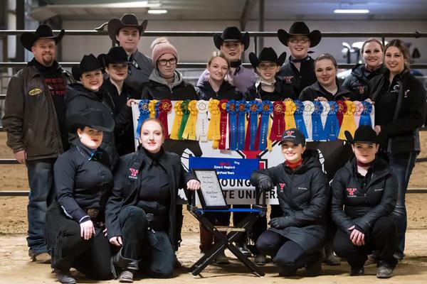 Equine team