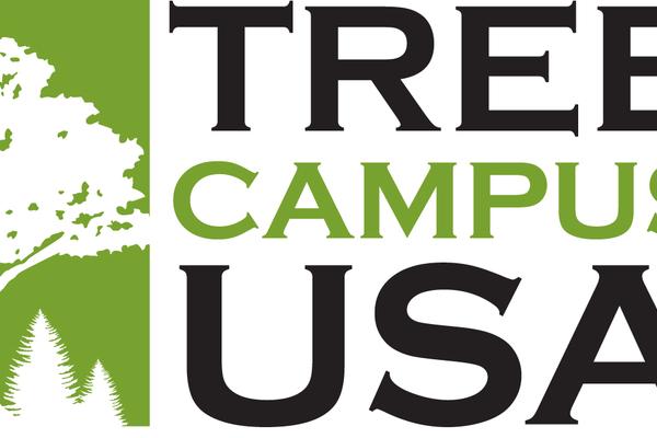 Treecampus usa