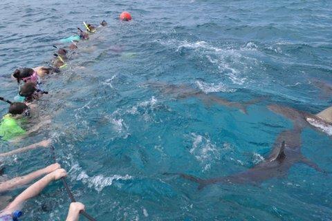 Biology of sharks