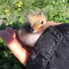 Baby bird resized